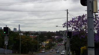 another view, note the jacaranda tree.