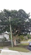 One of the many established trees on route.