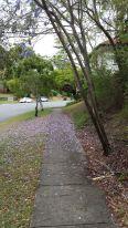Jacaranda flowers on the ground.