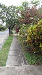 colourful bushes