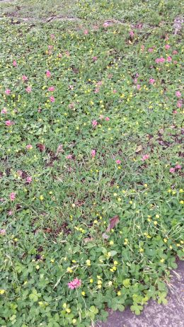 colourful weeds on footpath