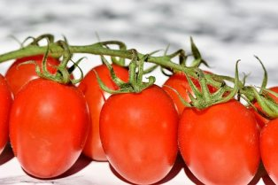 tomatoes-3480643__340